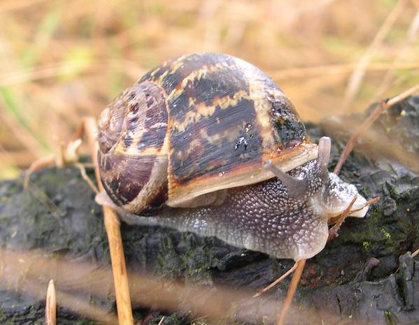 snailuse