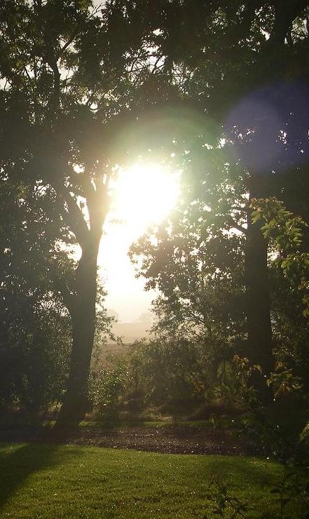 sunthroughtrees3